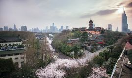 Fiori di ciliegia in tempio di Jiming di Nanchino Fotografia Stock Libera da Diritti