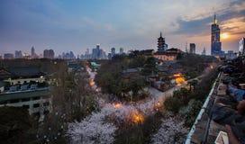 Fiori di ciliegia in tempio di Jiming di Nanchino Fotografie Stock