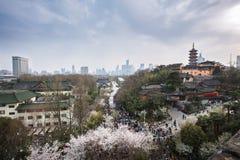 Fiori di ciliegia in tempio di Jiming di Nanchino Fotografia Stock