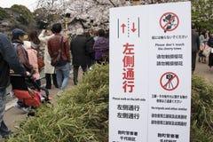 Fiori di ciliegia a Tokyo fotografia stock