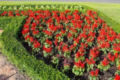 Fiori di colore in bello giardino immagine stock