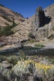 Fiori di colore giallo del fiume di Yakima Fotografie Stock Libere da Diritti