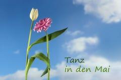 Fiori di dancing, un tulipano bianco e una gerbera rosa contro il bl Fotografia Stock