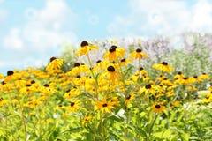 Fiori di estate Fotografia Stock Libera da Diritti