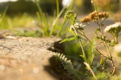 Fiori di estate di colore verde dell'erba Fotografia Stock