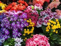 Fiori di estate in fioritura Fotografia Stock Libera da Diritti