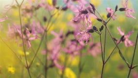 Fiori di estate nel selvaggio archivi video