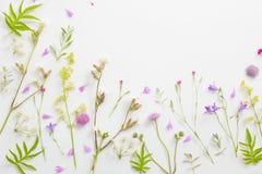 Fiori di estate sul fondo del Libro Bianco fotografie stock