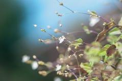 Fiori di estate sul prato inglese Fotografia Stock Libera da Diritti