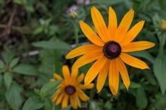 Fiori di estate in un giardino Fotografia Stock Libera da Diritti