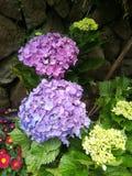 Fiori di fioritura Fotografie Stock Libere da Diritti