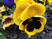 Fiori di fioritura Fotografia Stock