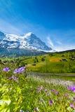 Fiori di fioritura con il bello paesaggio dello svizzero Immagine Stock Libera da Diritti
