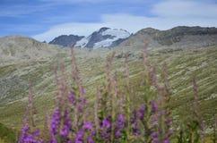Fiori di fioritura con il lago della montagna Immagine Stock Libera da Diritti