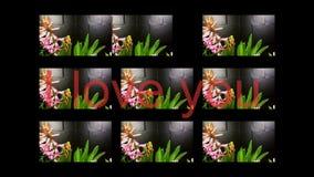 Fiori di fioritura con il lago della montagna archivi video