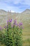 Fiori di fioritura con il lago della montagna immagini stock libere da diritti