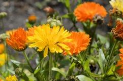 Fiori di fioritura con il lago della montagna Fotografie Stock Libere da Diritti
