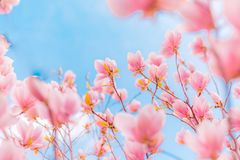 Fiori di fioritura di estate splendida della molla, fondo ispiratore della natura Immagine Stock