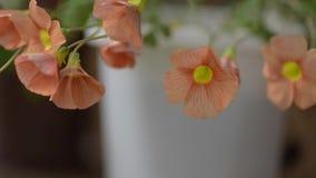 Fiori di fioritura in primavera video d archivio