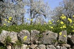 Fiori di fioritura su Maiorca Immagine Stock Libera da Diritti