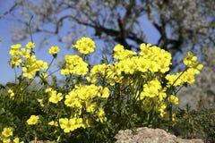Fiori di fioritura su Maiorca Immagine Stock