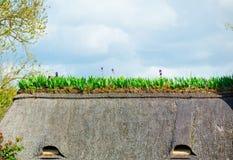 Fiori di fioritura sulla costruzione Immagini Stock Libere da Diritti