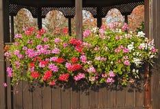 Fiori di fioritura variopinti sullo scaffale della capanna Fotografia Stock
