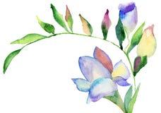 Fiori di fresia, illustrazione dell'acquerello Fotografia Stock