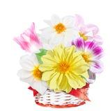 Fiori di Georgina e tulipano rosa in canestro rosso bianco Mazzo dei fiori variopinti isolati su fondo bianco Immagine Stock Libera da Diritti
