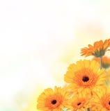 Fiori del fiore Fotografia Stock