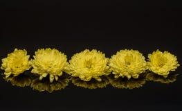 Fiori 01 di giallo fotografie stock libere da diritti