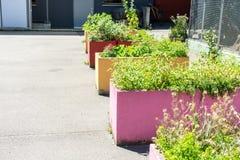 Fiori di giardinaggio urbani Fotografie Stock Libere da Diritti