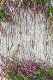 Fiori di Heather sui vecchi precedenti di legno fotografia stock libera da diritti