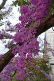 Fiori di Inthanin o albero di San Bartolomeo della regina fotografie stock libere da diritti