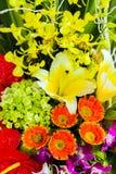 fiori di Lily Gerber della calla dei fiori, ambiti di provenienza delle margherite fotografie stock