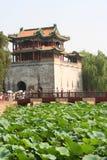 Fiori di loto e del Pagoda nel palazzo di estate Immagine Stock
