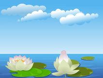 Fiori di loto sul lago Immagini Stock Libere da Diritti