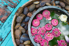 Fiori di Lotus e pietre della stazione termale Fotografia Stock