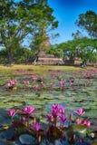 Fiori di Lotus nella vecchia città di Sukhothai della Tailandia immagini stock libere da diritti