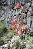 Fiori di Machu Picchu Fotografie Stock Libere da Diritti