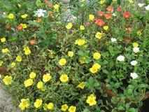 Fiori di multipli in giardino Fotografie Stock Libere da Diritti