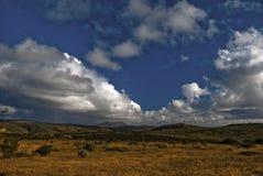 Fiori di Namaqualand Immagine Stock Libera da Diritti
