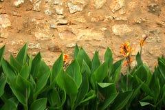 Fiori di parete Fotografia Stock Libera da Diritti
