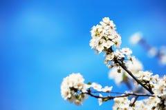 Fiori di Pasqua Fotografia Stock Libera da Diritti