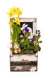 Fiori di Pasqua in una scatola Fotografie Stock