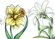 Fiori di poco IDA - fiori di sussurro Illustrazione di Stock