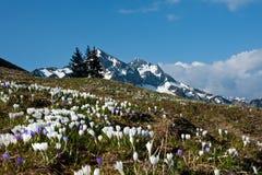Fiori di primavera Fotografia Stock Libera da Diritti