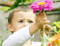 Fiori di raccolto del ragazzo Fotografia Stock Libera da Diritti