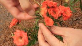 Fiori di raccolto della ragazza nel giardino video d archivio
