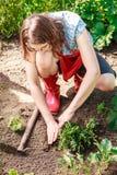 Fiori di reimpianto del giardiniere della donna Fotografia Stock Libera da Diritti